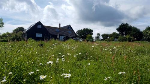 The Little Barn with summer wild meadow flowers